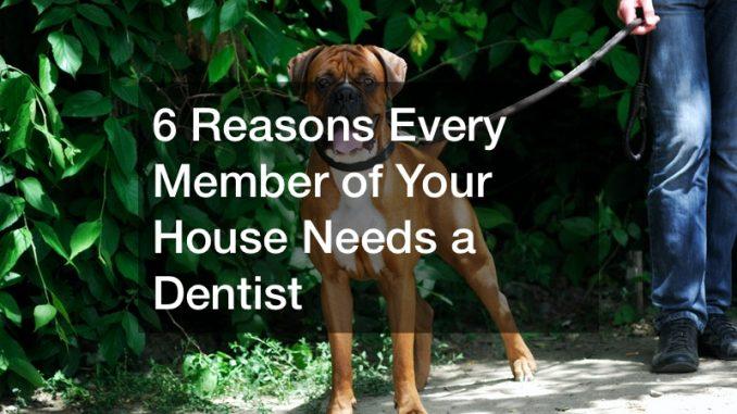 local dog dentist